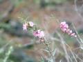 Rain and wildflowers at Yelverton Brook
