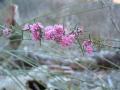 Spring Flowers at Yelverton Brook