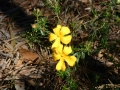 Yellow Flowers in Spring time