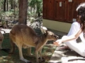 holiday-with-wildlife-at-yelverton-brook-margaret-river-0897557579