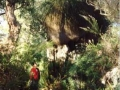 looking_at_tall_blackboy-yelverton-brook-margaret-river-0897557579